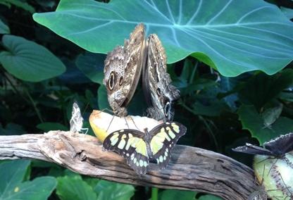 15 fjärilar