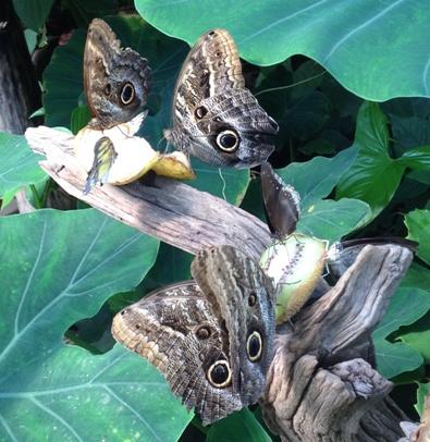 17 fjärilar