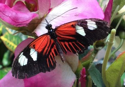 18 fjäril