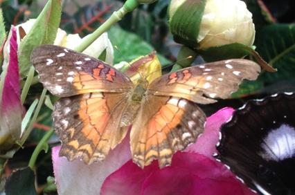19 fjäril